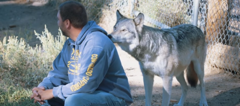 A Wolf Walks Up behind a Veteran and this happens…(video)